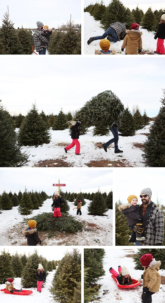 tree-hunt-2015